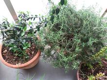 garden2013040913.jpg