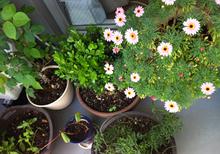 garden201304092.jpg