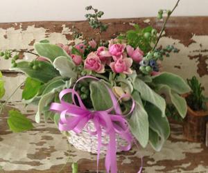 flower_2014062602.jpg