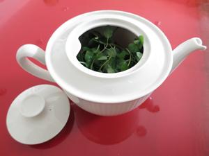 herbal_tea5