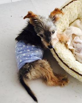 犬の腎不全治療