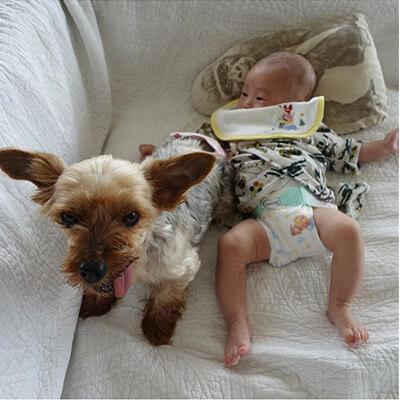 保護犬と赤ちゃん